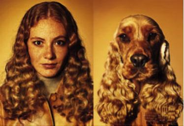 Development Language Owner dog1